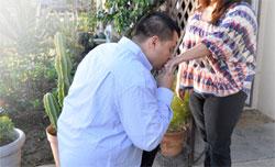 Wedding Proposal Rings